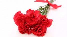 新社会人!母の日は親孝行のチャンス!花キューピットで花を贈ろう。